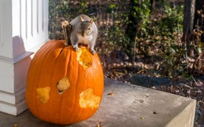 5 Ways To Critter Proof Your Pumpkin