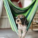 Picking Out The Perfect Hammock