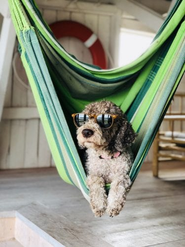 Dog Hanging in Hammock
