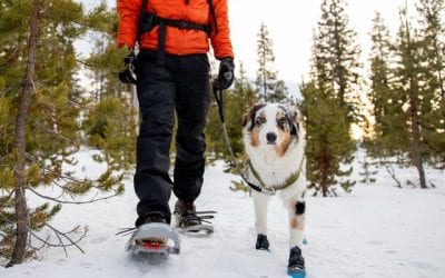 Keeping Your Pet Warm in Winter